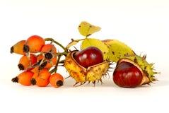 Dogrose & chestnut. On a light background Royalty Free Stock Photo