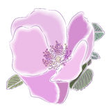 Dogrose flower. Bright pink flower of a dogrose. A  illustration Stock Photos
