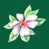 Dogrose flower Royalty Free Stock Image