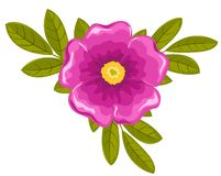 Dogrose flower and leaves. Vector illustration. Isolated on white Stock Photos