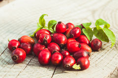 Dogrose fruits Stock Images