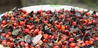 Dogrose frukter Royaltyfria Foton