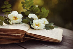Dogrose on the open books on a table royalty free stock photos