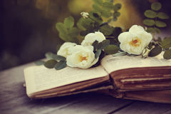 Dogrose on the open books on a table stock photography