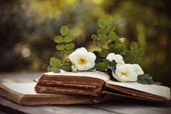 Dogrose and open books on a table stock images