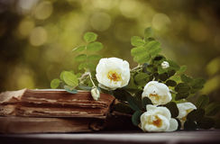 Dogrose on the open old books royalty free stock image
