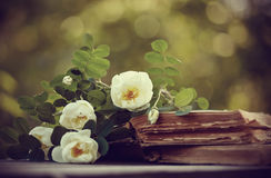 Dogrose on the open old books royalty free stock photos