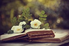 Dogrose and open books on a table stock photography