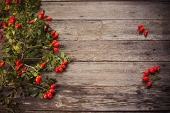 Dogrose over Wooden Background Stock Image