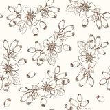 Dogrose Seamless Pattern. Collection of berries. Stock Photography