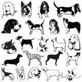Dogs 1 Royalty Free Stock Images