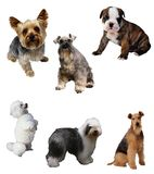 Dogs Stock Images