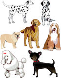 Dogs. Vector Illustration of 7 dogs or puppies isolated