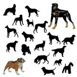 Dogs. Black silhouette dogs on white background Stock Photography