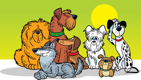 Dogs. To illustrate some cartoon dog breeds Royalty Free Stock Image