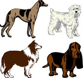 Dogs 2. Vector Illustration of 4 different dogs. Dogs2 Royalty Free Stock Photo