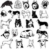 Dogs 2 Royalty Free Stock Image