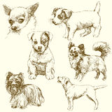 Dogs. Cute dogs - hand drawn collection Royalty Free Stock Photography