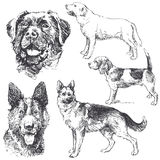 Dogs. Collection - hand drawn illustration Royalty Free Stock Photography