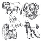 Dogs. Collection - hand drawn illustration Stock Image