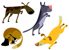 Dogs. Cute dogs set,  illustration Royalty Free Stock Images