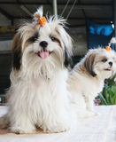 Dogs Royalty Free Stock Photography