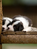 Dogs. Two cute dogs baby on the tree Stock Photo