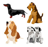 Dogs. Four dogs in a vector vector illustration