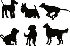 Dogs. New set of some dog vector Royalty Free Stock Photo