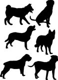 Dogs. 6 silhouettes of different breeds of dogs royalty free illustration