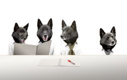 Dogs in meeting Royalty Free Stock Images