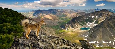 Dogs also see beauty. Royalty Free Stock Image