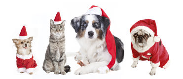Dogs And Cat Christmas Stock Photos