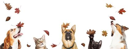 Free Dogs And Cats With Falling Autumn Leaves Stock Photography - 161122972