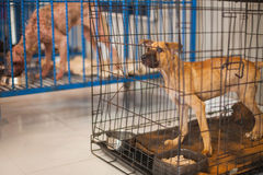 Dogs in animal shelter. Homeless dogs in animal shelter royalty free stock images