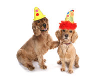 Dogs as clowns Stock Photo