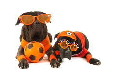 Dogs as Dutch soccer supporters Royalty Free Stock Images