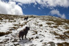 Dogs on the ascent to the top. 2 dogs on a mountain with some snow in a cloudy blue day Stock Photo