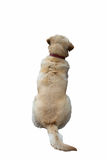 Dogs back Royalty Free Stock Photos
