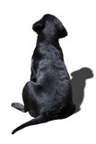 Dogs back Royalty Free Stock Photo