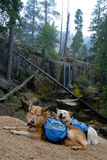 Dogs with Backpacks. Two happy dogs with backpacks paused while hiking on a mountain trail, waterfall in background Stock Photo