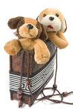 Dogs in the bag. Two plush dogs sitting in the lady's bag. Isolated on white background Royalty Free Stock Photo