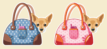 Dogs in bags. Vector illustration with two chihuahua sitting in bags Stock Images