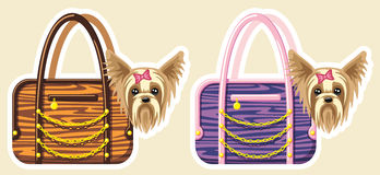 Dogs in bags. Vector illustration with two yorkshires sitting in bags Royalty Free Stock Photos