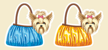 Dogs in bags. Vector illustration with two yorkshires sitting in bags Royalty Free Stock Photo