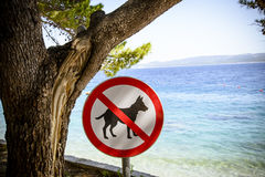Dogs banned from the beach sign. Royalty Free Stock Photos