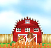Dogs and barn Royalty Free Stock Image