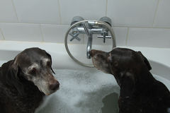 Dogs in the bathtub Royalty Free Stock Photography