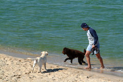 Dogs in the beach. Playing with dogs Stock Photos