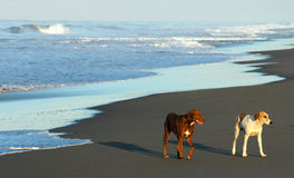 Dogs on beach, Mexico Stock Photo